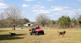 Farmer & His Dogs — Stockfoto