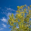 Autumn Leaves And Blue Sky — Stock Photo