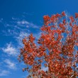 Red Leaves And Autumn Sky - Photo