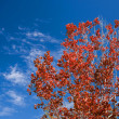 Red Leaves And Autumn Sky — Stock Photo