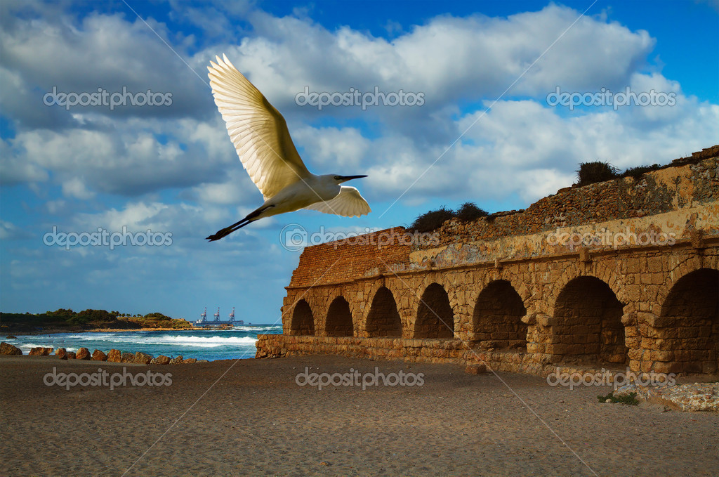 Little egret flying over Caesarea aqueduct in Israel — Stock Photo #6427183