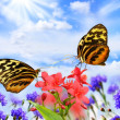 Butterflies with flowers — Stock Photo #6498916