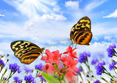 Butterflies with flowers — Stock Photo