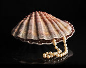 Pearls inside the shell — Stock Photo