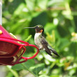 Hummingbird — Stock Photo #6732817