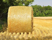 Hay bails in a field — Stock Photo