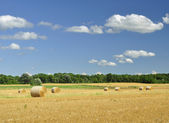 Country summer landscape — Stock Photo