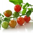 Cherry tomatoes — Stock Photo #6745728
