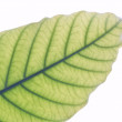 Green leaf texture — Foto de Stock