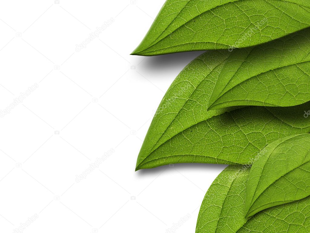 Green leaves on white background — Stock Photo #6645695