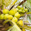 Fruit, green coconut on coconut tree - Stock Photo