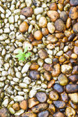 Small plant growth between stones river — Stock Photo