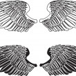 Black and White Wings - Stock Vector