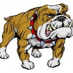 Bulldog clipart illustration — Stock Vector