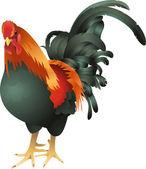 Chicken cockrel illustration — Stock Vector