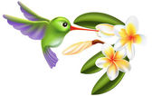 Humming bird and flowers — Stock Vector