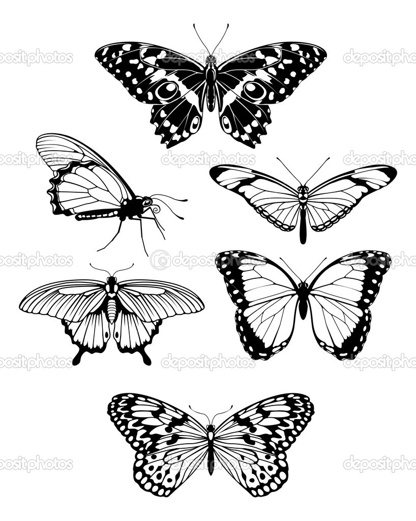 Beautiful stylised butterfly outline silhouettes | Stock Vector