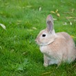 Rabbit Close Up With Defocused Background — Stock Photo