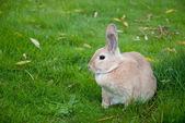 Rabbit Close Up With Defocused Background — Stock Photo