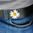 Stock Photo: White flower in belt hole holding blue jeans