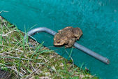 Single Male Toad Sitting Behind Amphibean Fence — Stock Photo