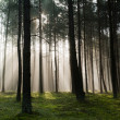 Misty old foggy forest — Stock Photo