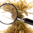 Search needle in a haystack — Stock Photo