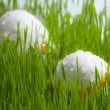 Two easter Eggs on green grass on white background with water d — Stock Photo