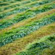 Cutting grass in field at summer — Stock Photo