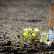 Small flower potting in to the field — Stock Photo