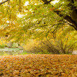 Yellow leafs in park at fall — Stock Photo