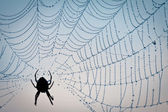 Dewdrop in spider web — Stock Photo