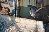 Amanecer de invierno en barco de alimentos — Foto de Stock