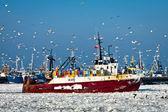 Barco de forezen con gaviota entrando en el puerto — Foto de Stock