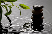 Green plant and pebbles with waterdrop and ripples — Stock Photo