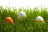 árbol de huevos de pascua en hierba verde sobre fondo blanco — Foto de Stock