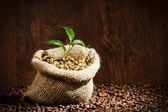 Golden coffee seed on burlap coffee sack with small plant — Stock Photo
