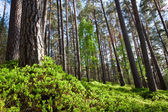 Forest in National Park — Stock Photo