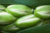 Small green plant background — Stockfoto