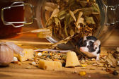 Mouse in basement feel cheese — Foto de Stock