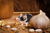 Small mouse smell something in basement — Stockfoto