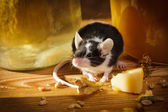 Small mouse smell something in basement — Foto Stock