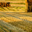 Stubble after harvest at sunset — Stock Photo