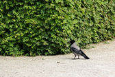 Bird watching — Stock Photo