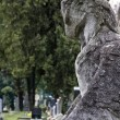 Falcon, protector of the cemetery - Stock Photo
