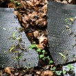 Broken jewish tombstone — Stock Photo