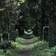 Savaged cemetery way — Stock Photo