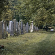 Stock Photo: Almost untended cemetery section