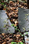 Broken jewish tombstone — Stock Photo