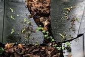 A broken jewish tombstone — Stock Photo